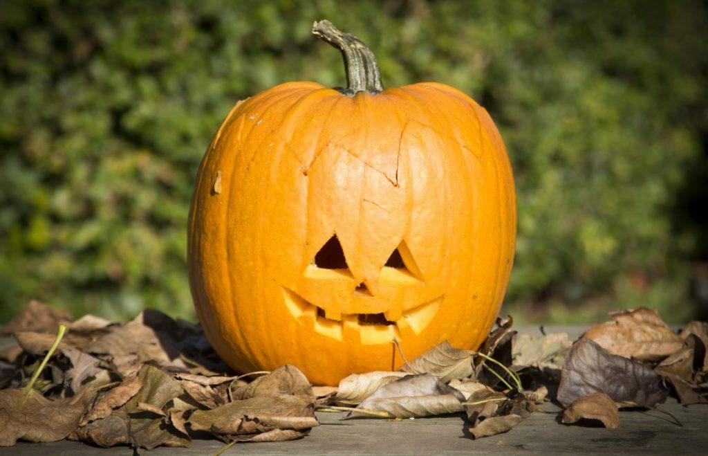 Kreativ halloween lav selv græskarlygte med græskar udskæring